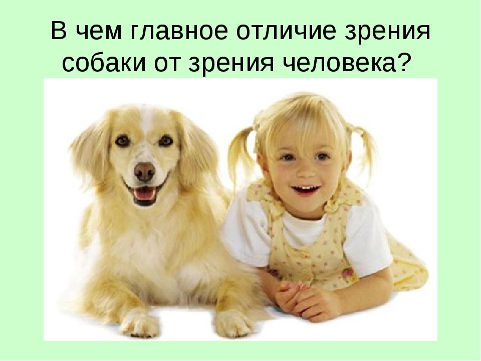 В чем главное отличие зрения собаки от зрения человека?
