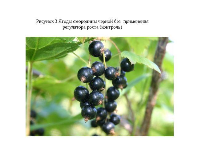 Рисунок 3 Ягоды смородины черной без применения регулятора роста (контроль)