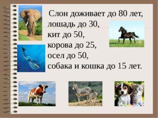 Слон доживает до 80 лет, лошадь до 30, кит до 50, корова до 25, осел до 50,