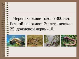 Черепаха живет около 300 лет. Речной рак живет 20 лет, пиявка - 25, дождевой