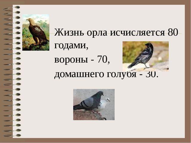 Жизнь орла исчисляется 80 годами, вороны - 70, домашнего голубя - 30.
