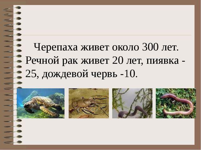 Черепаха живет около 300 лет. Речной рак живет 20 лет, пиявка - 25, дождевой...
