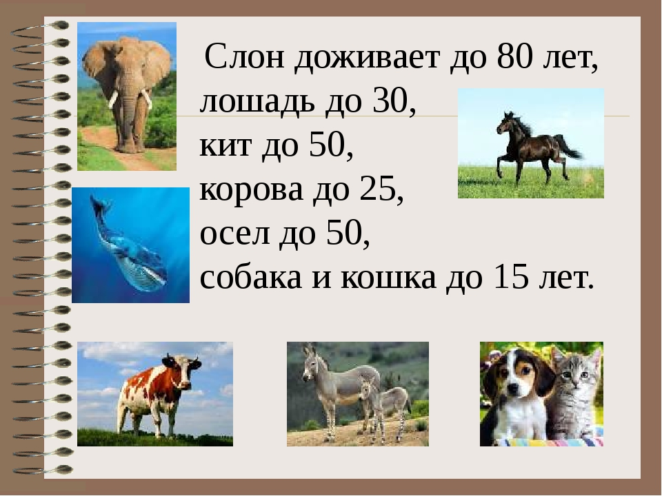 Слон доживает до 80 лет, лошадь до 30, кит до 50, корова до 25, осел до 50,...