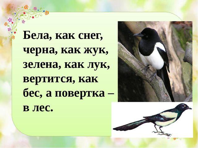 Бела, как снег, черна, как жук, зелена, как лук, вертится, как бес, а повертк...