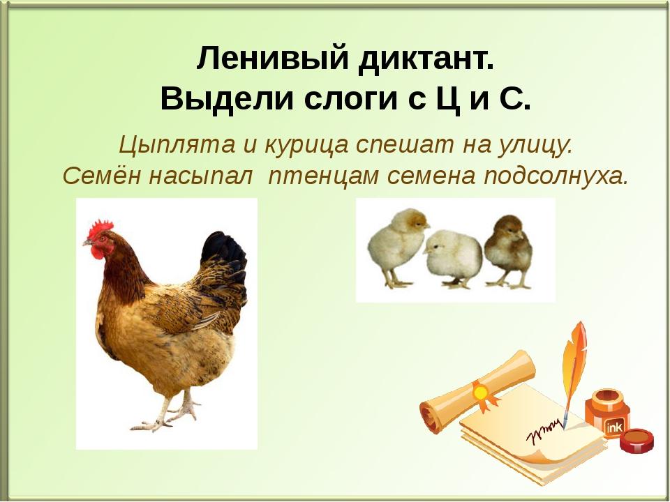 Цыплята и курица спешат на улицу. Семён насыпал птенцам семена подсолнуха. Л...