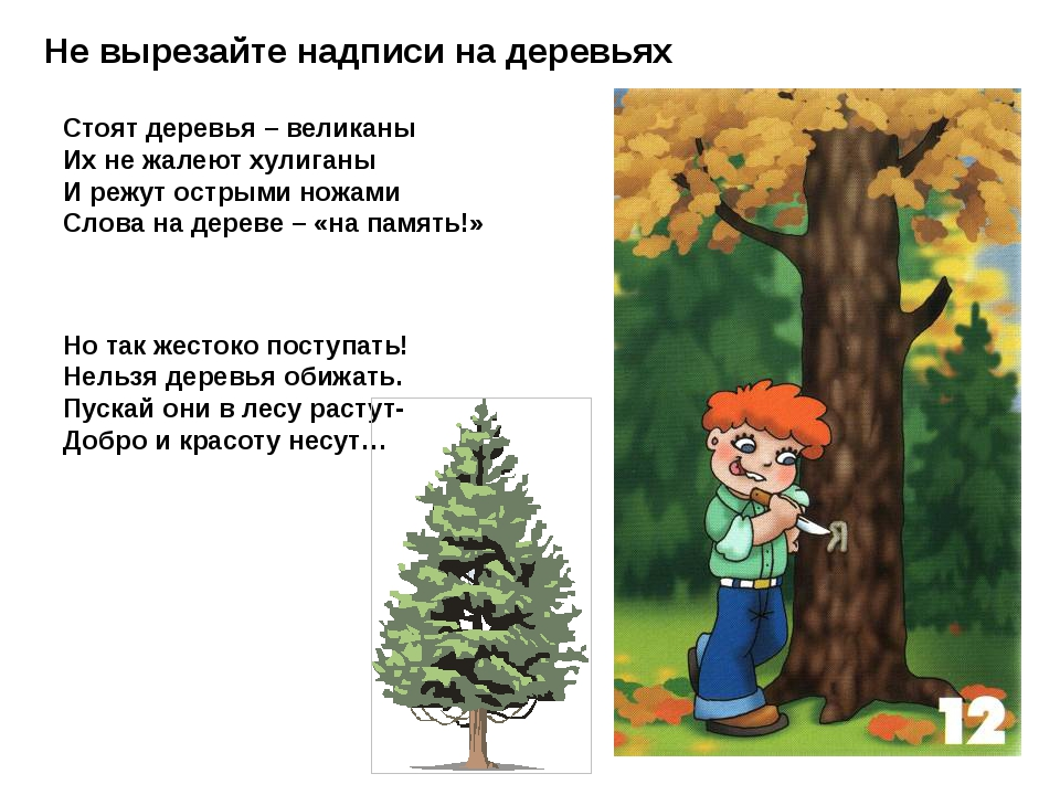 Не вырезайте надписи на деревьях Стоят деревья – великаны Их не жалеют хулига...