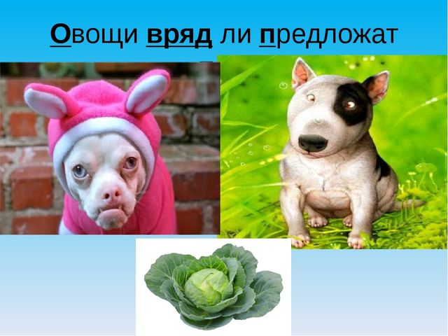 Овощи вряд ли предложат псу.