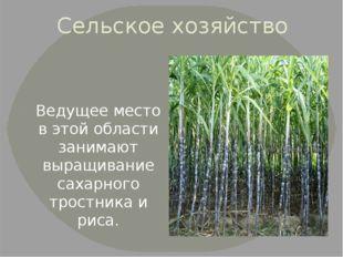 Сельское хозяйство Ведущее место в этой области занимают выращивание сахарног