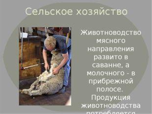 Сельское хозяйство Животноводство мясного направления развито в саванне, а мо