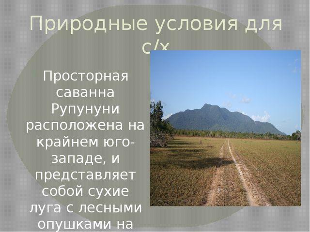 Природные условия для с/х Просторная саванна Рупунуни расположена на крайнем...