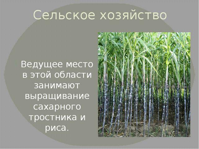 Сельское хозяйство Ведущее место в этой области занимают выращивание сахарног...