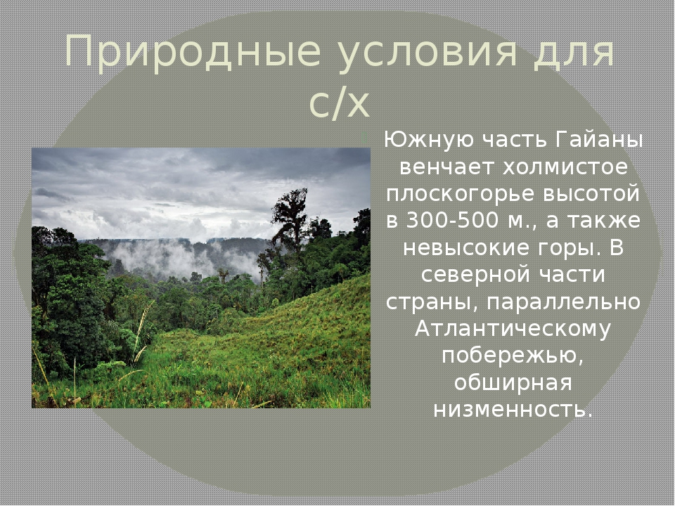 Природные условия для с/х Южную часть Гайаны венчает холмистое плоскогорье вы...