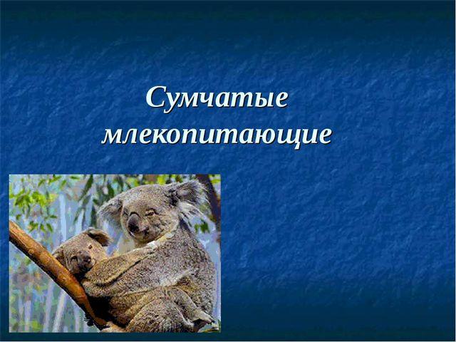 Сумчатые млекопитающие