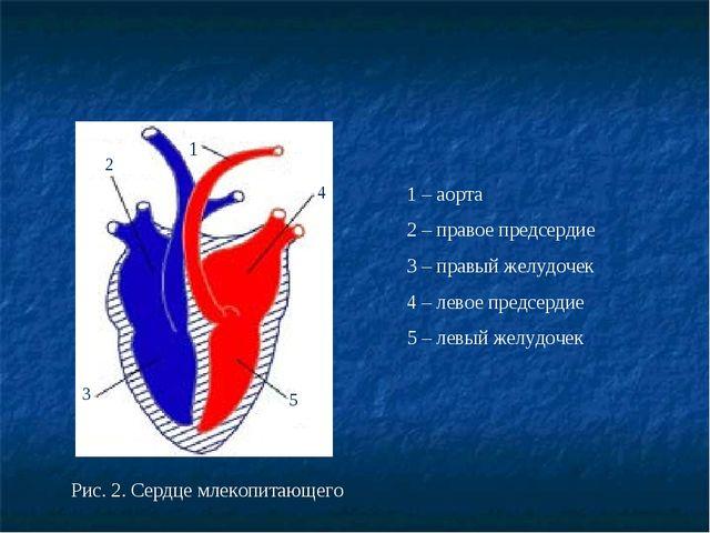 Рис. 2. Сердце млекопитающего 2 5 1 4 3 1 – аорта 2 – правое предсердие 3 – п...