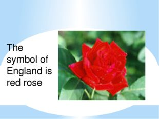 England The symbol of England is red rose