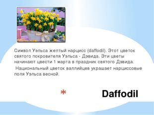 Daffodil Символ Уэльса желтый нарцисс (daffodil). Этот цветок святого покров