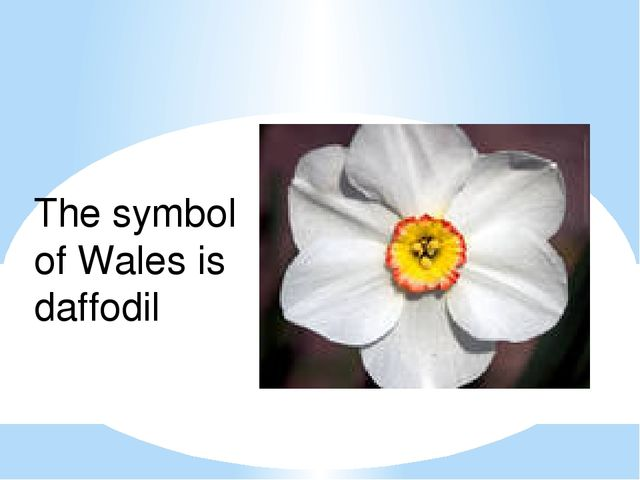 Wales The symbol of Wales is daffodil