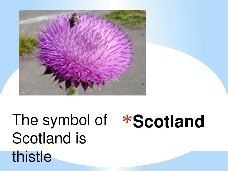Scotland The symbol of Scotland is thistle