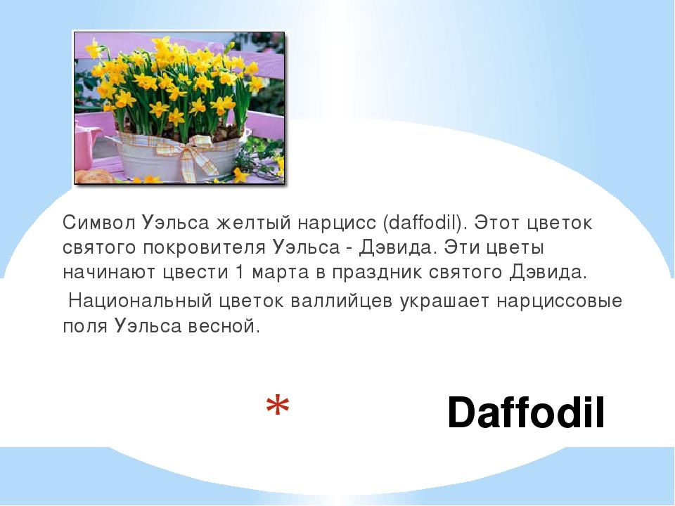 Daffodil Символ Уэльса желтый нарцисс (daffodil). Этот цветок святого покров...