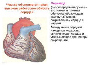 Чем же объясняется такая высокая работоспособность сердца? Перикард (околосер