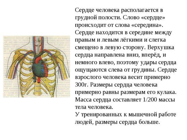 Сердце человека располагается в грудной полости. Слово «сердце» происходит от...