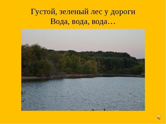 Густой, зеленый лес у дороги Вода, вода, вода…