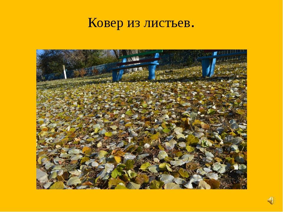 Ковер из листьев.