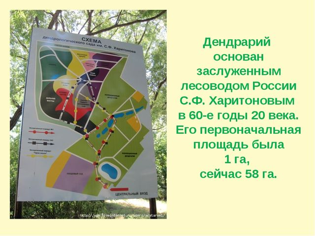 Дендрарий основан заслуженным лесоводом России С.Ф. Харитоновым в 60-е годы 2...