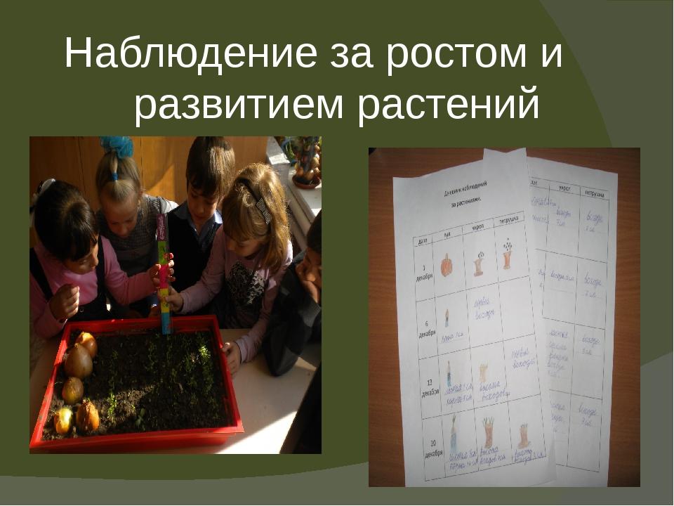 Наблюдение за ростом и развитием растений