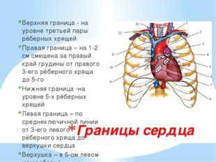 Границы сердца Верхняя граница - на уровне третьей пары рёберных хрящей Права