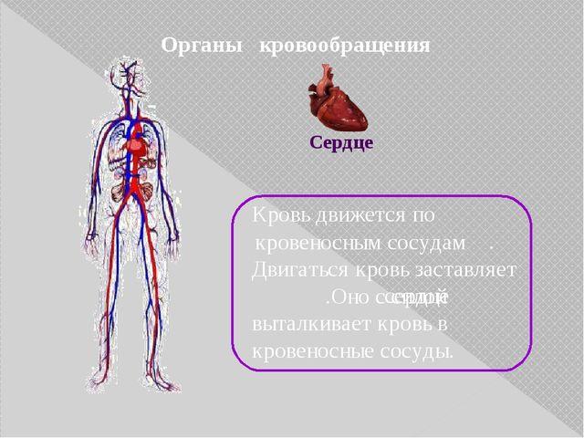 Органы кровообращения Кровь движется по . Двигаться кровь заставляет .Оно с с...