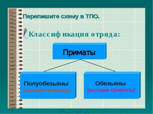 Перепишите схему в ТПО. Классификация отряда: Приматы Полуобезьяны (низшие пр