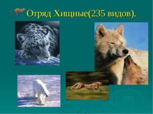 Отряд Хищные(235 видов).