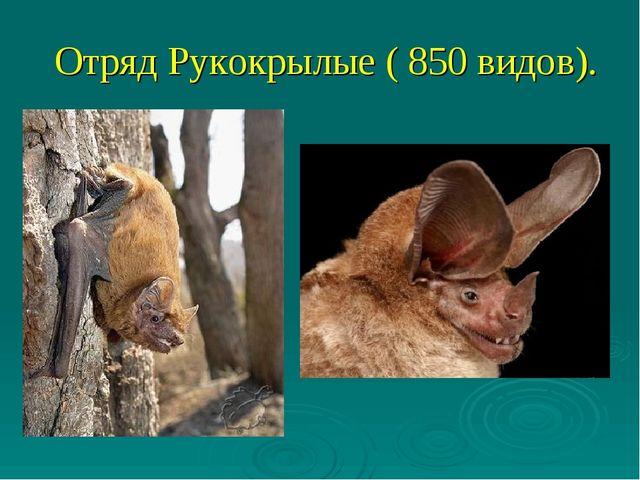 Отряд Рукокрылые ( 850 видов).