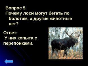 Вопрос 5. Почему лоси могут бегать по болотам, а другие животные нет? Ответ: