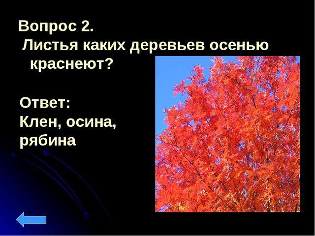 Вопрос 2. Листья каких деревьев осенью краснеют? Ответ: Клен, осина, рябина