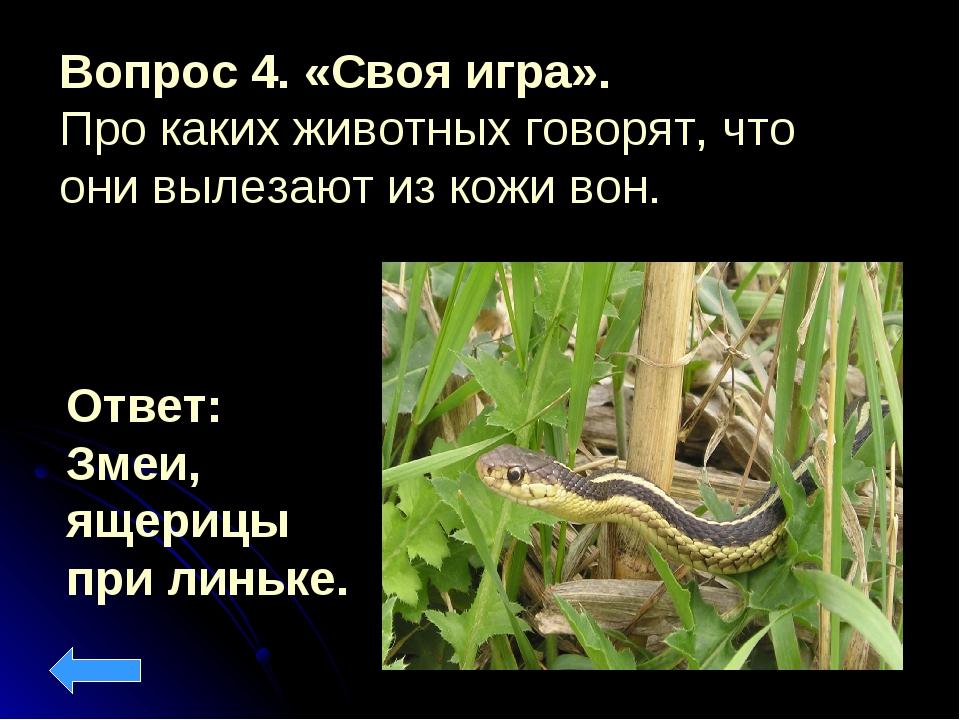 Вопрос 4. «Своя игра». Про каких животных говорят, что они вылезают из кожи в...