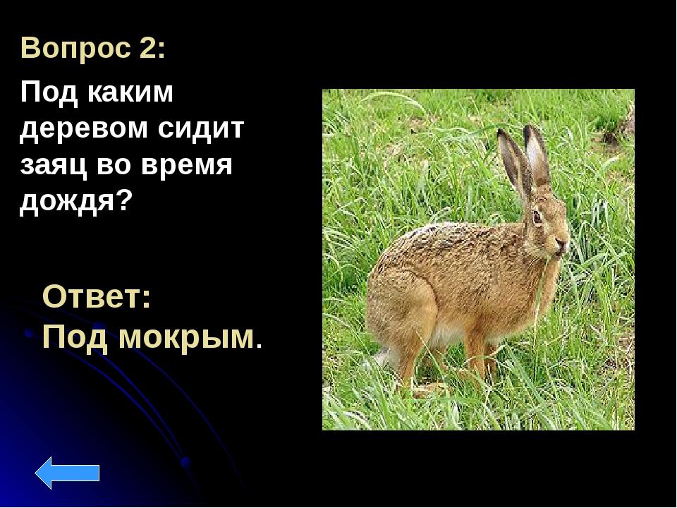 Вопрос 2: Под каким деревом сидит заяц во время дождя? Ответ: Под мокрым.