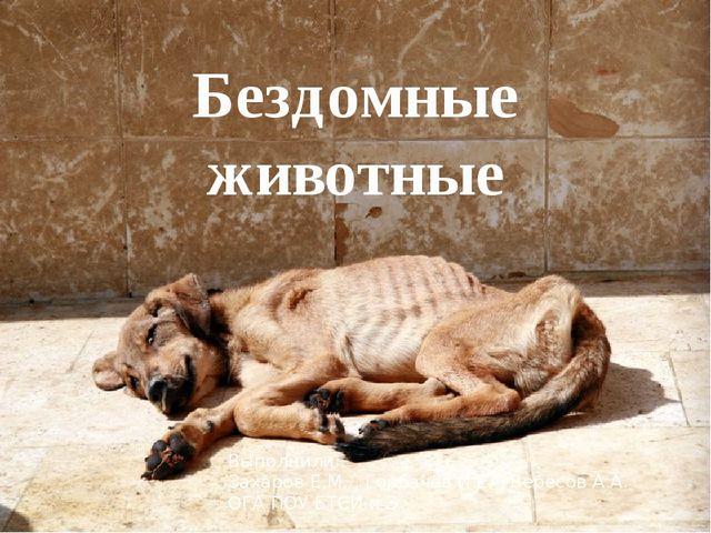 Бездомные животные Выполнили: Захаров Е.М. , Горбачев И.Е. , Вересов А.А. ОГА...