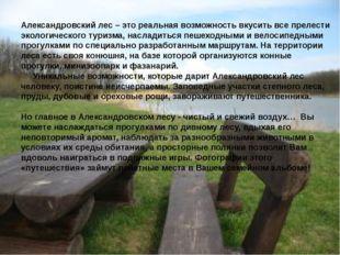 Александровский лес – это реальная возможность вкусить все прелести экологиче
