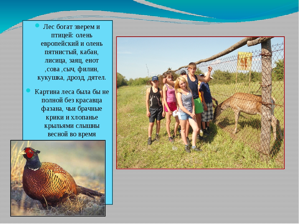 Лес богат зверем и птицей: олень европейский и олень пятнистый, кабан, лисица...