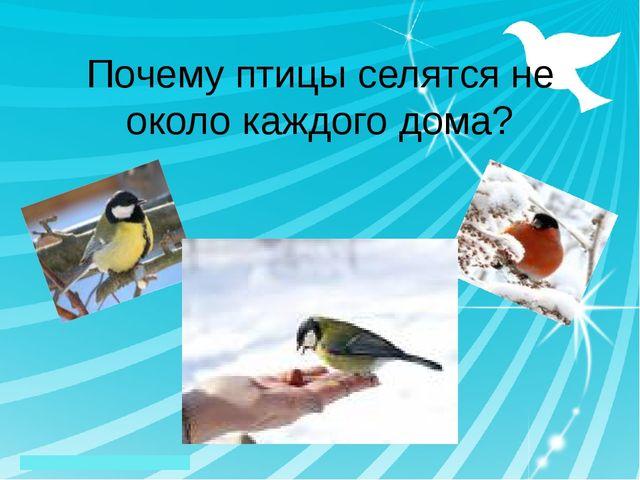 Почему птицы селятся не около каждого дома?