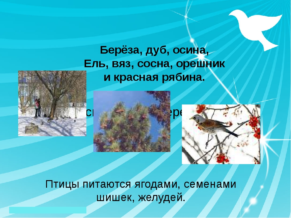 А сколько тут деревьев: Птицы питаются ягодами, семенами шишек, желудей. Бер...