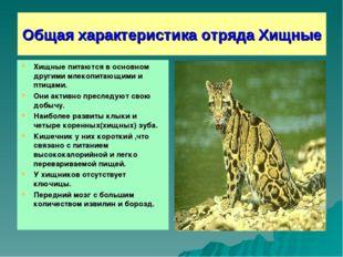 Общая характеристика отряда Хищные Хищные питаются в основном другими млекопи