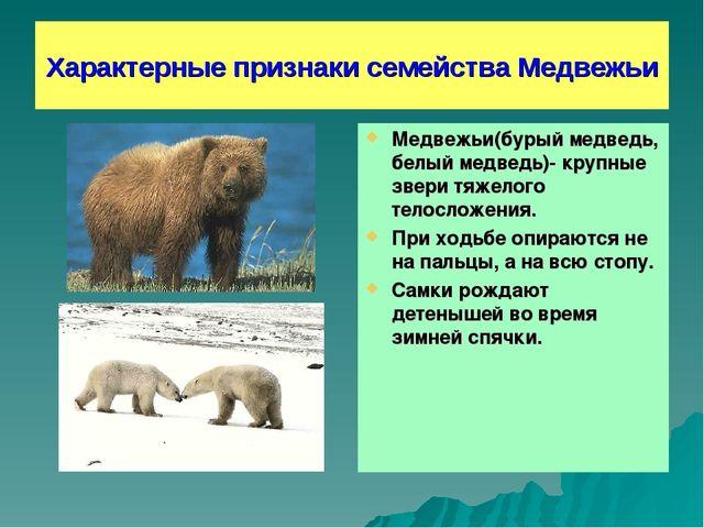 Характерные признаки семейства Медвежьи Медвежьи(бурый медведь, белый медведь...