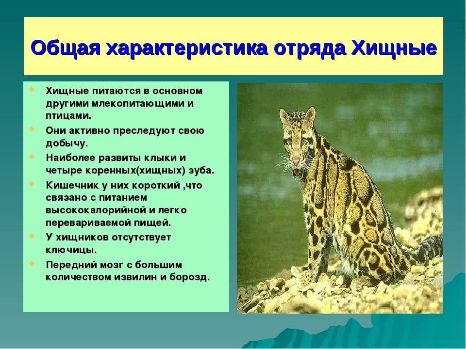 Общая характеристика отряда Хищные Хищные питаются в основном другими млекопи...