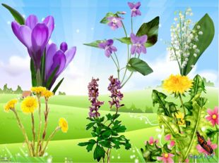 Названия цветов - первоцветов: 1. подснежник 2. лесная фиалка 3. ландыши 4. м