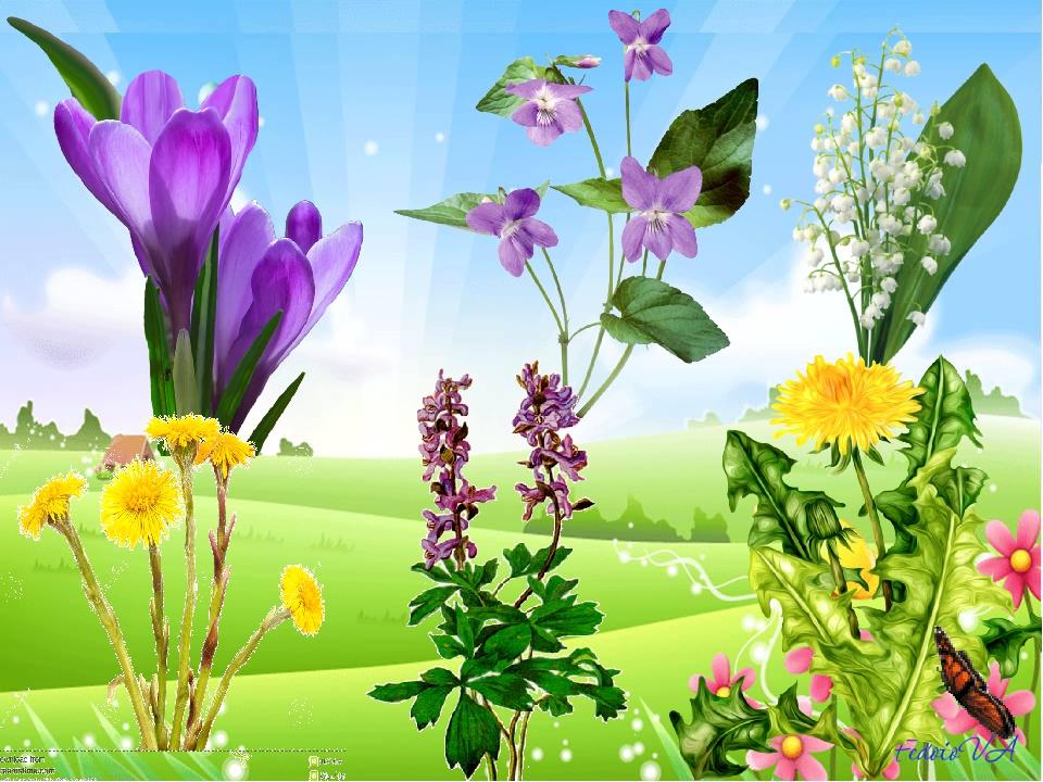 Названия цветов - первоцветов: 1. подснежник 2. лесная фиалка 3. ландыши 4. м...