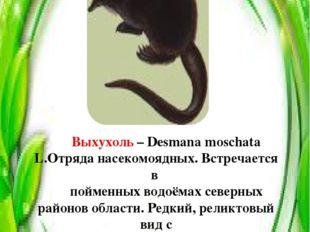 Выхухоль – Desmana moschata L.Отряда насекомоядных. Встречается в пойменных в
