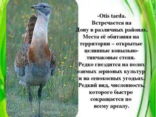 Дрофа -Otis tarda. Встречается на Дону в различных районах. Места её обитания